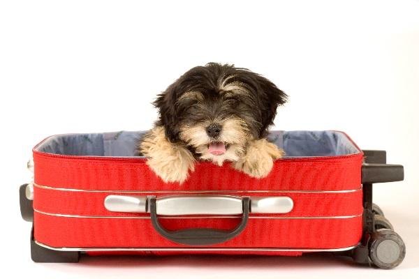 Cómo llevar perros o mascotas a Irlanda